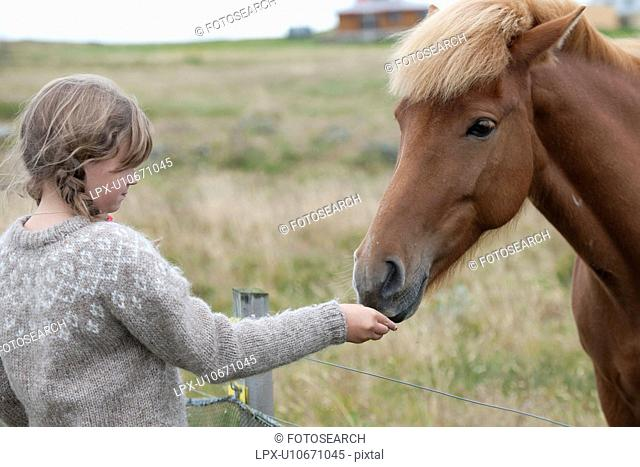 Yound girl hand feeding a chestnut Icelandic horse over a wire fence