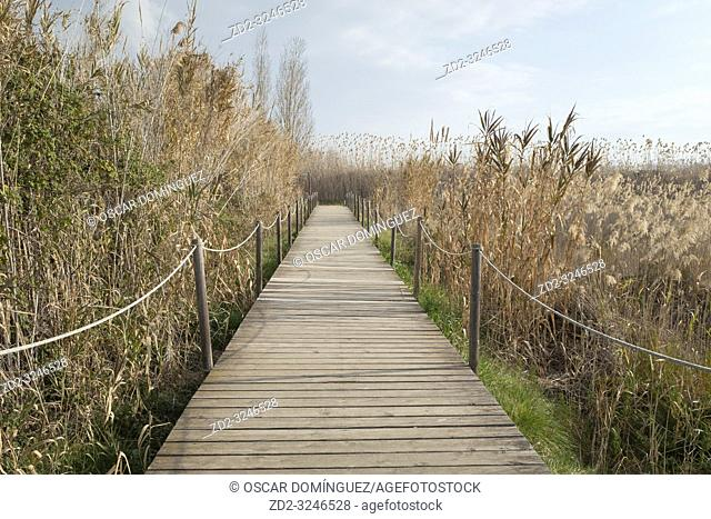 Wooden walkway over Natural Areas of the Llobregat Delta. Barcelona province. Catalonia. Spain