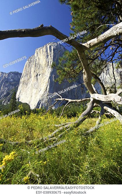 Capitan view in Yosemite Valley, California, United States