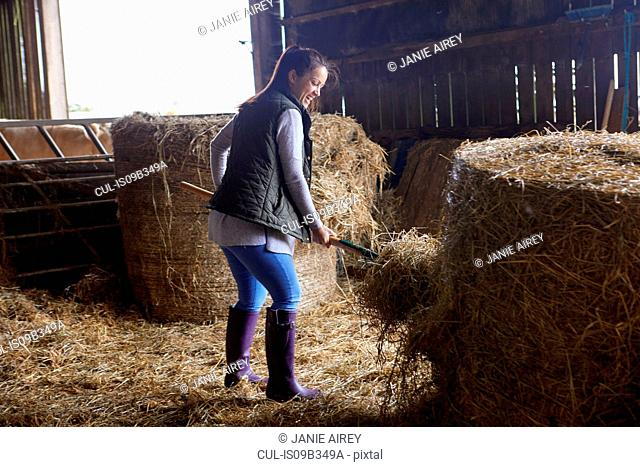 Woman in barn shovelling hay