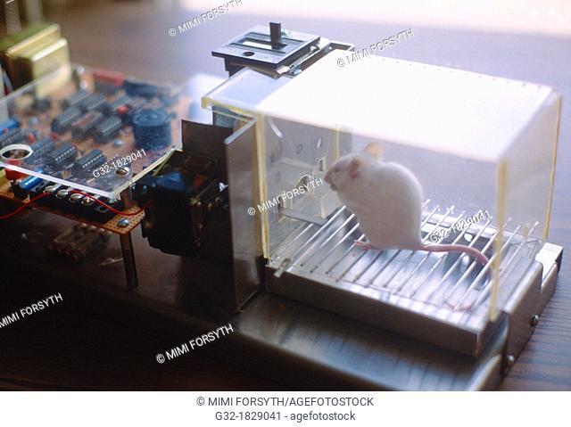 Mouse in Skinner box, behavior experiment- mouse presses bar for food