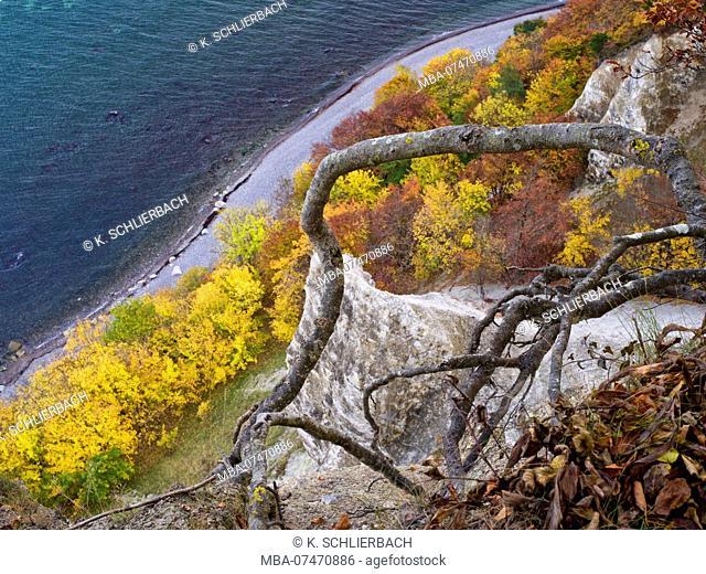 Europe, Germany, Mecklenburg-Western Pomerania, Island of Rügen, Jasmund National Park, UNESCO World Natural Heritage Site European beech forests