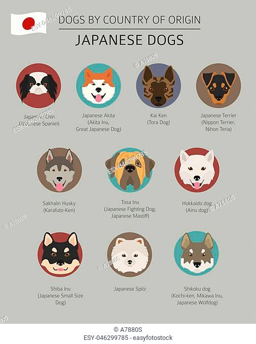 Dogs by country of origin. Japanese dog breeds. Infographic template. Vector illustration