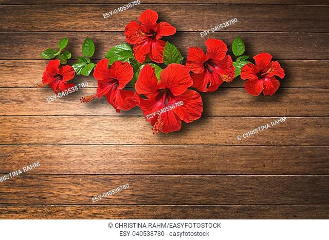 Red hibiscus flower on caulked mahogany wood background texture closeup