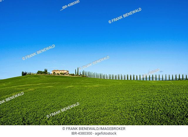 Typical green Tuscan landscape in Bagno Vignoni, Val d'Orcia, farm on hill, fields, cypresses and blue sky, San Quirico d'Orcia, Tuscany, Italy