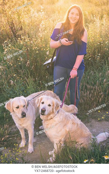 Teenager walking her pet dogs. Golden retrievers