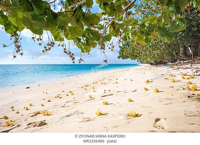 Flowers on the beach of Rarotonga