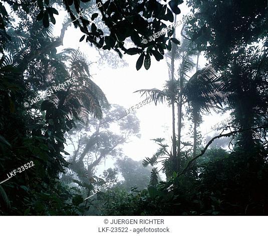 Cloud Forest of Rancho Grande, Rainforest, Henri Pittier National Park, Venezuela