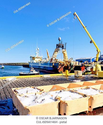 Crane unloading crates of fresh fish from fishing boat, Grindavik, Iceland