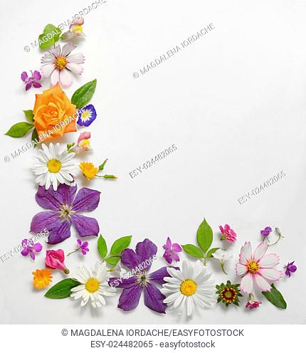 Frame of Various Flowers Isolated on White Background