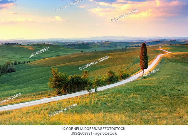 Rural road with lonely cypress tree leading to the Farmhouse , Corsano, Siena province, Tuscany, Italy