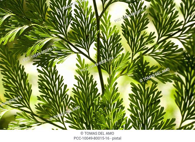Branches of bright green leaves