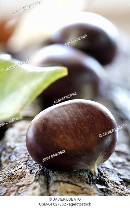 Chestnuts in Autumn set