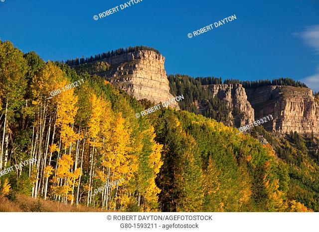 Aspen color in autumn