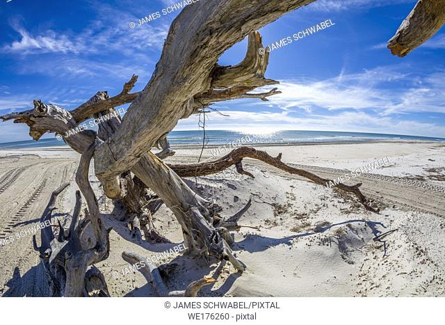 driftwood on Gulf of Mexico beach on St George Island in the panhandle or forgotten coast area of Florida in the United States