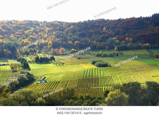 forest and vineyards near Kinheim and Kindel in Moselle valley