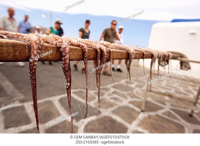 Octopus hung up to dry with the passing tourists in the background, Naoussa, Paros, Cyclades Islands, Greek Islands, Greece, Europe