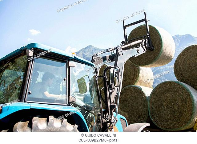Harvesting tractor stacking circular haystacks
