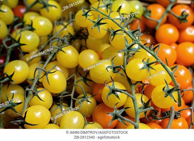 baby tomatoes-Solanum lycopersicum