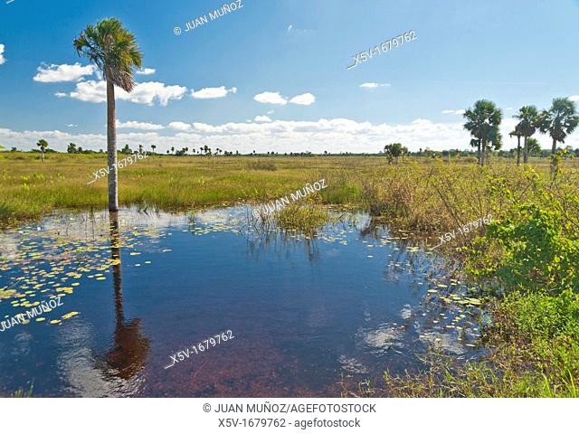 Zapata Peninsula, Sancti Spiritus Province, Cuba