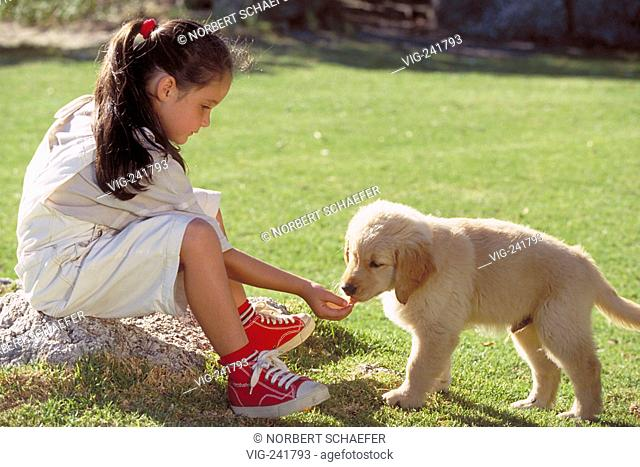 park-scene, full-figure, 8-year-old girl with long brown hair wearing white short trousers plays with her little dog on a meadow  - GERMANY, 08/08/2004