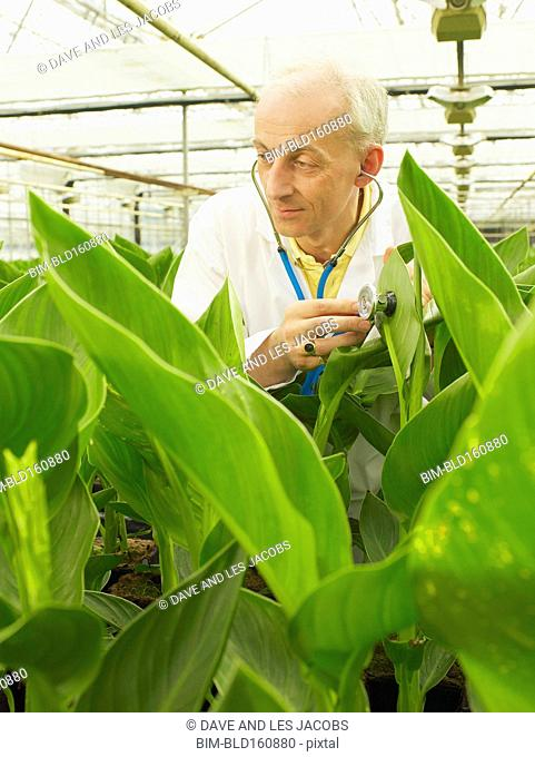 Caucasian scientist listening to plants with stethoscope in greenhouse