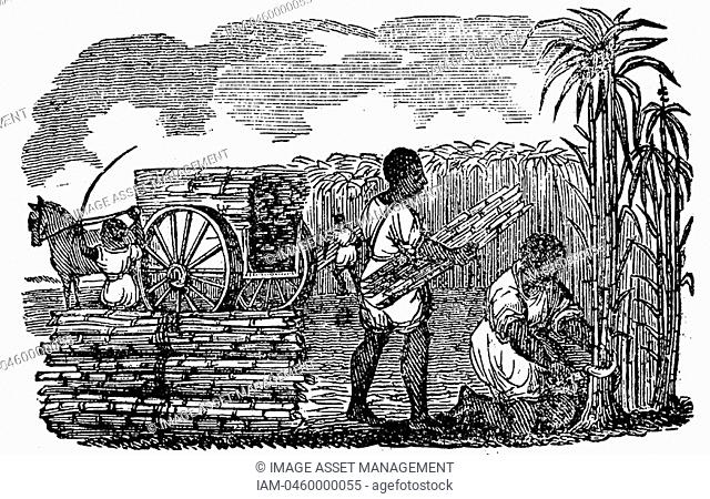 Slaves in tobacco plantation, Virginia  Woodcut from 'Scenes of American Wealth and Industry' Boston 1833  Woodcut