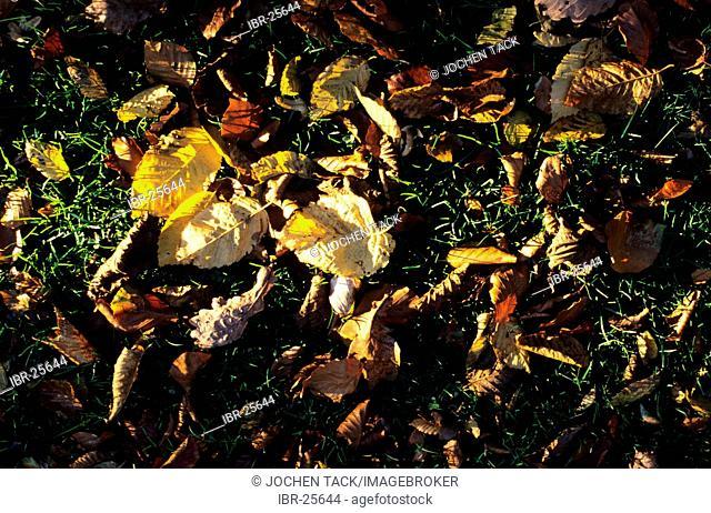 DEU, Germany: plants, leaves
