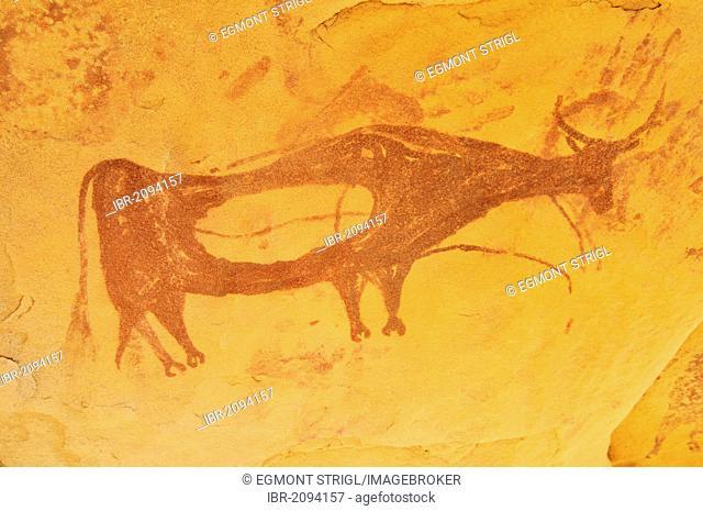 Painted cow, neolithic rock art at Arakokem, Adrar Tekemberet, Immidir, Algeria, Sahara, North Africa