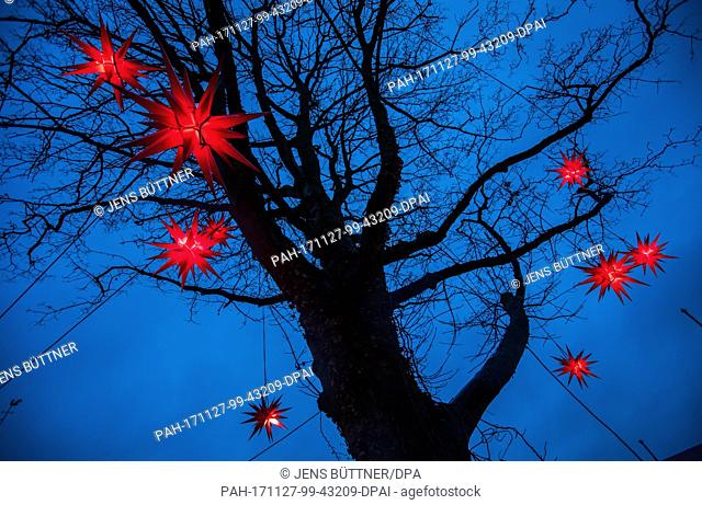 Red Christmas stars hang in a tree of the fairy tale forest after the opening of the children's Christmas market in Luebeck, Germany, 27 November 2017