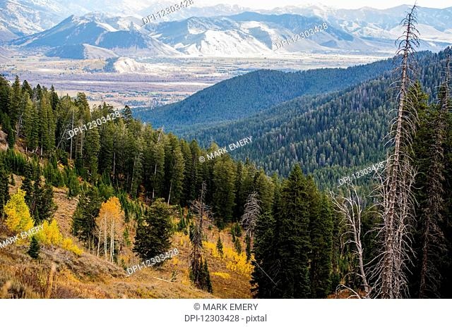 Landscape of pine forests over mountains and a rocky mountain range in the distance, the view coming into Jackson Hole; Wyoming, United States of America