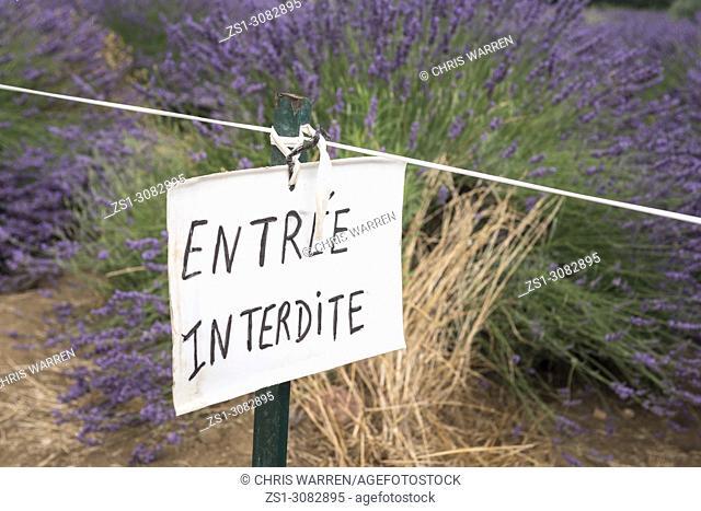 Forbidden access to the lavender fields Valensole Forcalquier Alpes-de-Haute-Provence Provence-Alpes-Cote d'Azur France