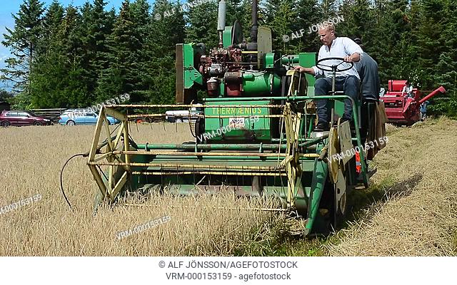 Work with an old selfgoing threshing machine at an oldtimes harvest festival in Svenstorp, Scania, Sweden
