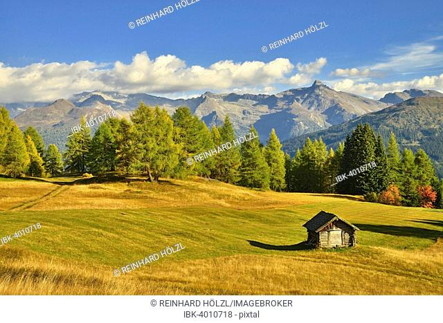 Cultural landscape with larch trees in autumn, Zillertal Alps at the back, Egger Mähder, Obernberg am Brenner, Tyrol, Austria