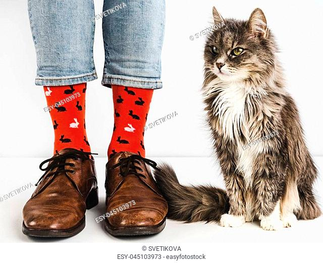 Stylish, vintage shoes, bright, colorful socks, sweet kitten and men's legs on a white background. Lifestyle, fashion, beauty