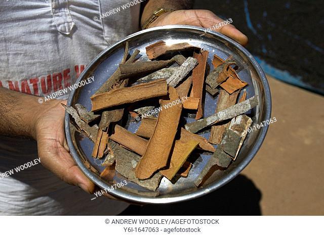 Bark of cinnamon laurel tree ground to make spice for confectionery and curries Sahakari Spice Farm Ponda Goa