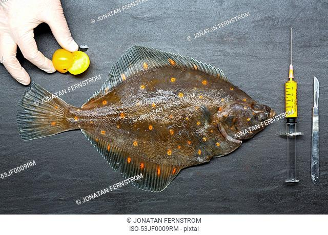 Gloved hand with fresh fish and syringe