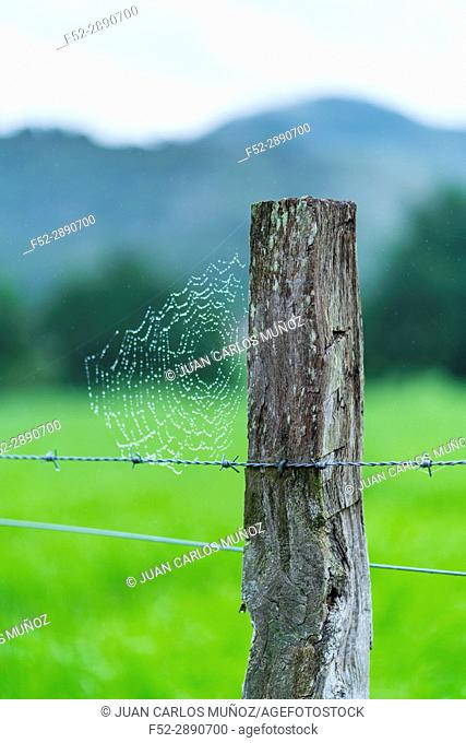 Drops of dew and spiderweb, Countryside in Matienzo, Ruesga Municipality, Cantabria, Spain, Europe