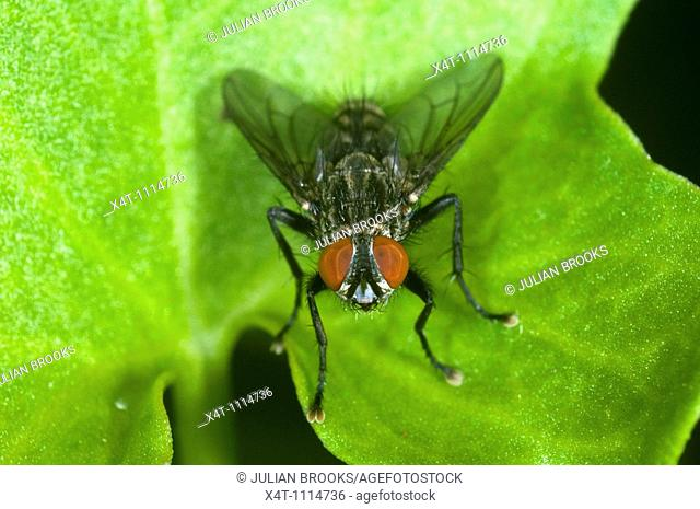 Extreme close up of a fly at rest on a leaf