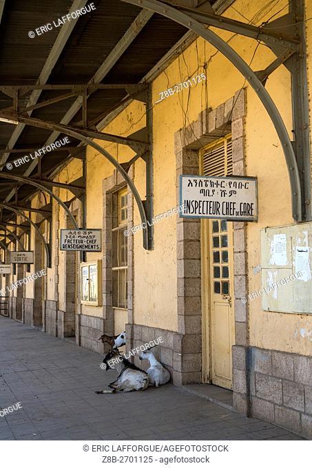 Ethiopia, Dire Dawa Region, Dire Dawa, goats on the train station platform