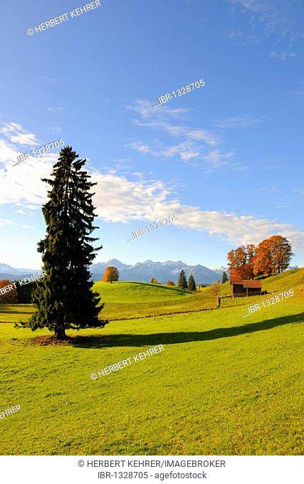 Autumn landscape near Fuessen, Ostallgaeu, Allgaeu, Upper Bavaria, Bavaria, Germany, Europe