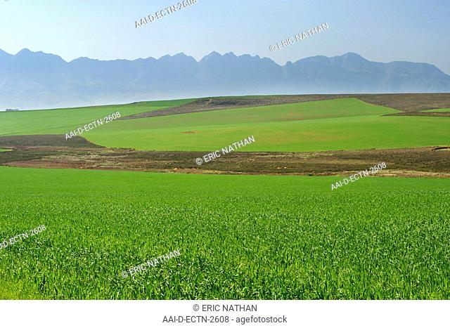 View of agricultural fields and the Langeberg mountain range from the N2 highway in South Africa's Western Cape Province