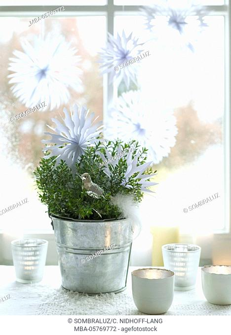 Paper stars at the window, plant, candles, silver bird