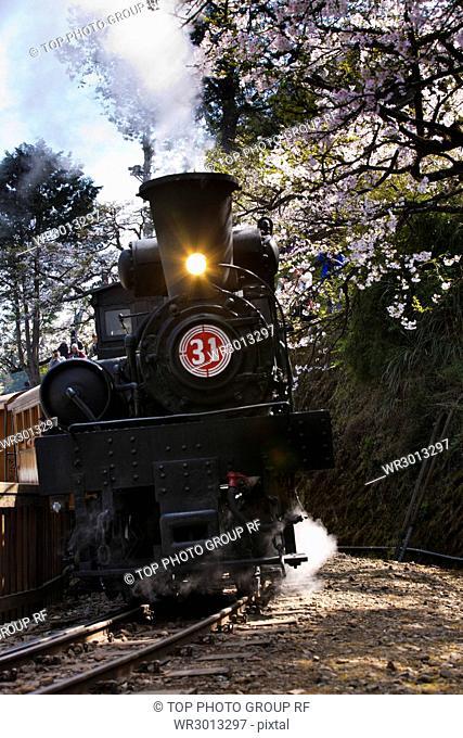 Ali Mountain;Sakura steam train