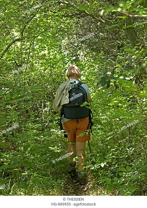 back view of middle aged woman with walking stick hiking through green bushes in forest. - 06/05/2008