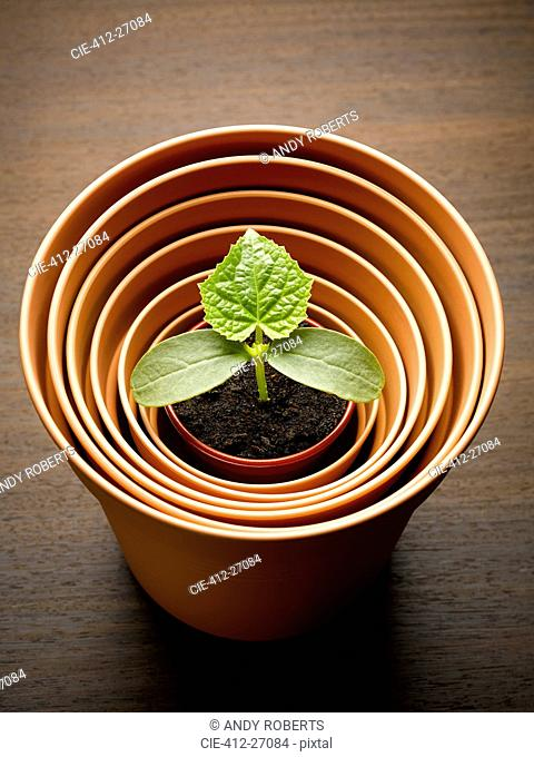 Plant sprouting in nesting flowerpot