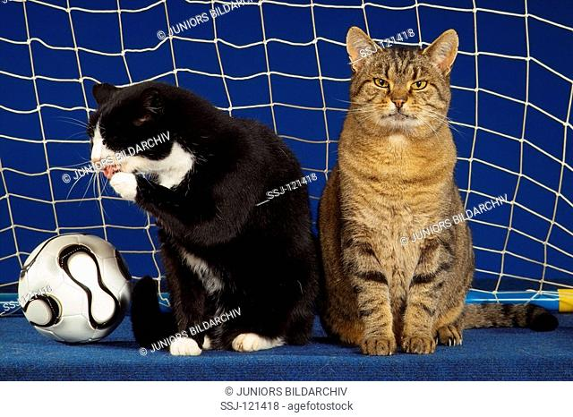 two domestic cats sitting in goal next to ball