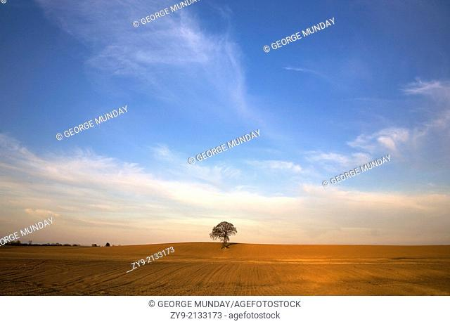 Tilled Field and Tree, Near Carlow, County Carlow, Ireland