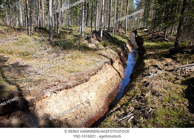 Trenching in the forest to improve tree growth in wet areas and to make the soil drier. Location Mustasuo Oulu Finland Scandinavia Europe EU