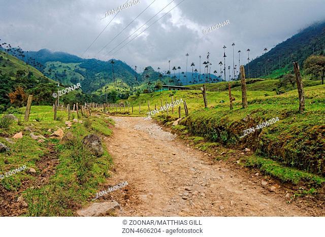 Cocora Tal, Quindío, Kolumbien / Cocora Valley, Quindío, Colombia